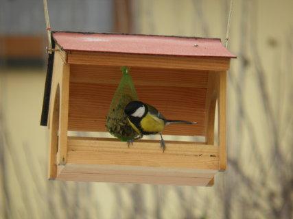 FOTKA - Ptáci v zimě 163