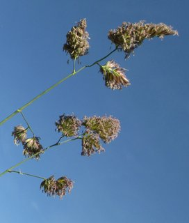 FOTKA - tráva proti nebi 2