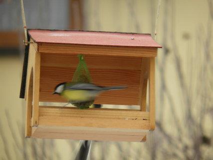 FOTKA - Ptáci v zimě 168