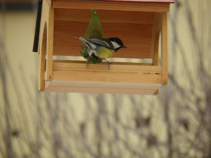 FOTKA - Ptáci v zimě 169