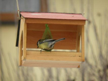 FOTKA - Ptáci v zimě 171