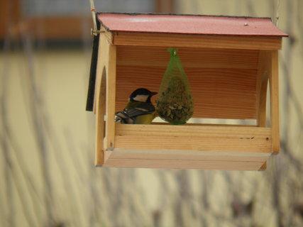 FOTKA - Ptáci v zimě 173