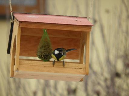 FOTKA - Ptáci v zimě 178