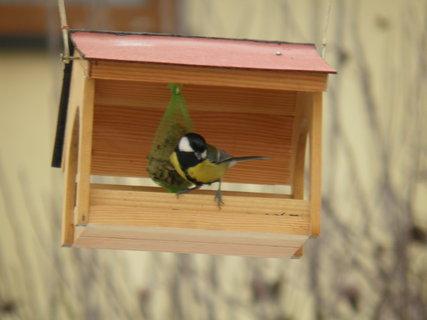 FOTKA - Ptáci v zimě 185