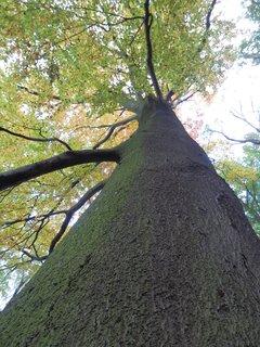 FOTKA - krásné stromy - Teplice - cestou na Doubravskou horu (Doubravku) od severu