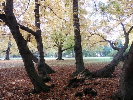 FOTKA - zámecký park, podzim v Teplicích