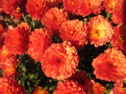 FOTKA - kytky na dvoře a zahrádce 2