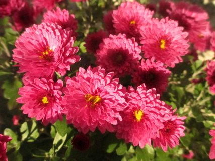 FOTKA - kytky na dvoře a zahrádce 3