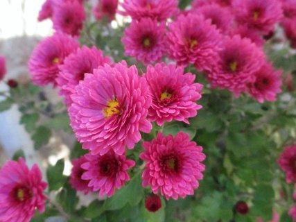 FOTKA - kytky na dvoře a zahrádce 4