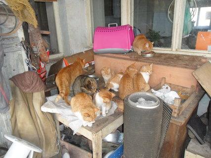 FOTKA - koťata