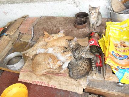 FOTKA - Koťata po jídle