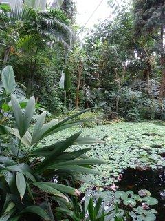 FOTKA - Botanická zahrada Teplice - krásná vnitřní expozice