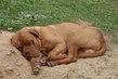 siesta po dobrém papání