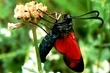 na motýlích křídlech