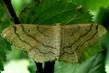 hmyzí eldorádo