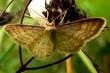hmyz kolem nás