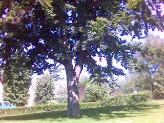 FOTKA - 200 lety strom