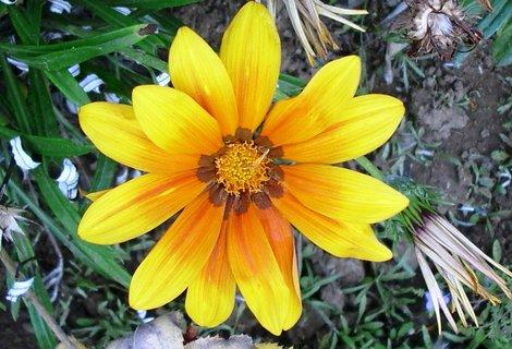 FOTKA - žlutá letní