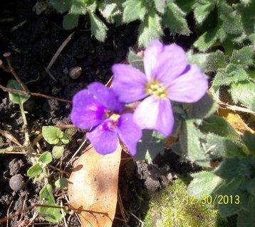 FOTKA - včera 30.12 na zahradě