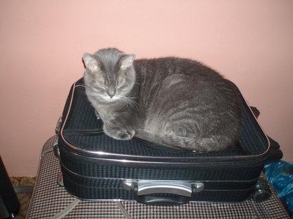 FOTKA - Čiko mi hlídá kufr do lázní.