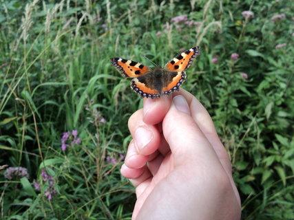 FOTKA - Nebojácný motýl
