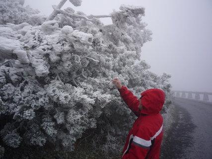 FOTKA - namrzlé stromy