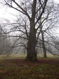 FOTKA - park v mlze..