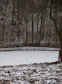 FOTKA - stopy na ledu rybníka