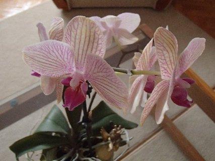 FOTKA - pohľad zhora na orchideu