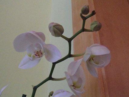 FOTKA - ešte bude kvitnúť, má aj puky