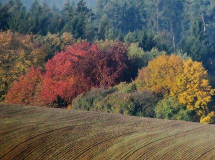 FOTKA - podzimní zbarvení 15