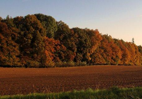 FOTKA - podzimní zbarvení 17