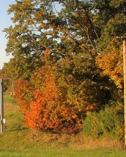 FOTKA - podzimní zbarvení 18