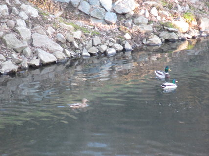 FOTKA - u řeky... 33