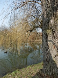 FOTKA - u rybníka v Milíčovském lese, Praha 4