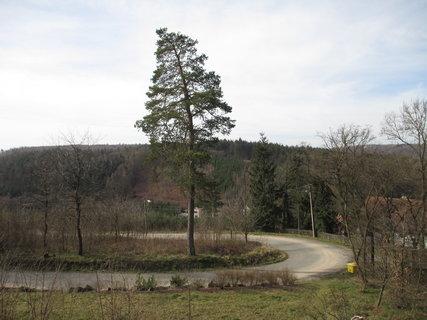 FOTKA - klikatá silnice