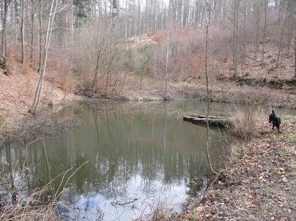 FOTKA - rybníček po cestě
