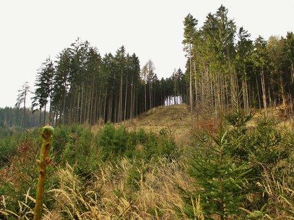 FOTKA - lesy kolem Spešova