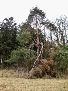 FOTKA - krásný strom