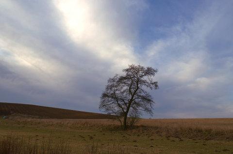 FOTKA - Holý strom