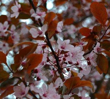 FOTKA - Včerejší procházka, rozkvetlé stromy