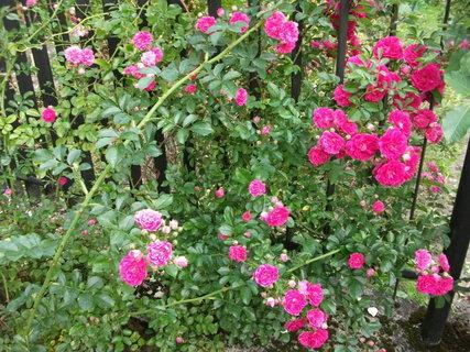 FOTKA - v zahradke
