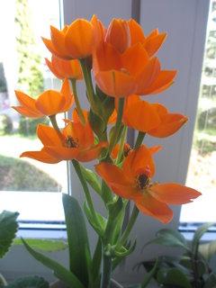 FOTKA - neznám název kytky...