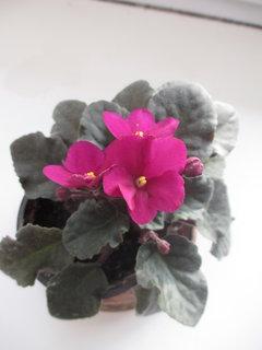 FOTKA - u klientky v květináči