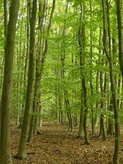 FOTKA - v lese.