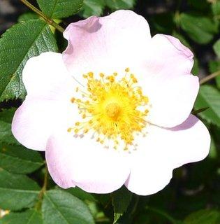 FOTKA - všude jsou květy .....