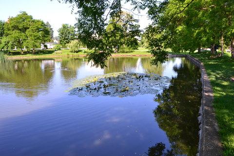 FOTKA - dopolední klid u rybníku Ohrada