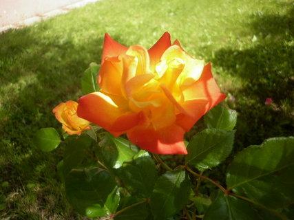 FOTKA -  Oranžovo-červená