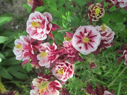 FOTKA - kvetoucí kytky na zahrádce