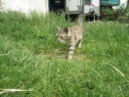 FOTKA - našlapuju v trávě